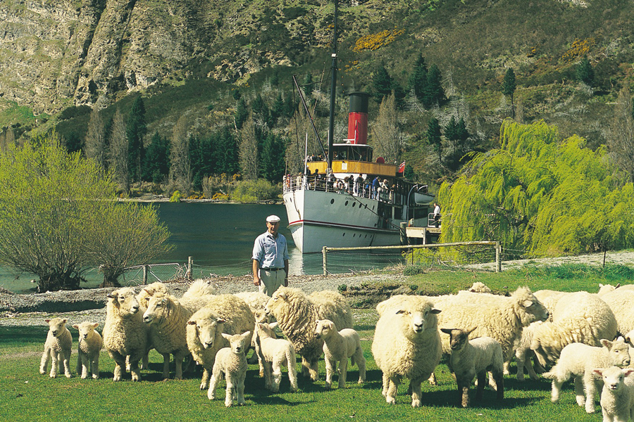 Earnslaw Queenstown Sheep Demonstration