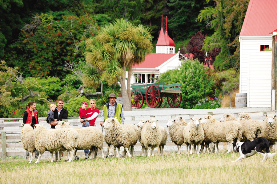 Earnslaw Queenstown Sheep