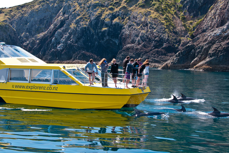 Explorer Group Dolphin Trip
