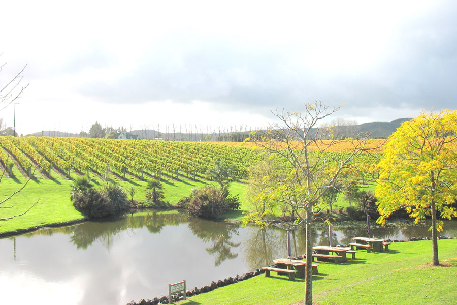 Fine WIne Tours Auckland Views