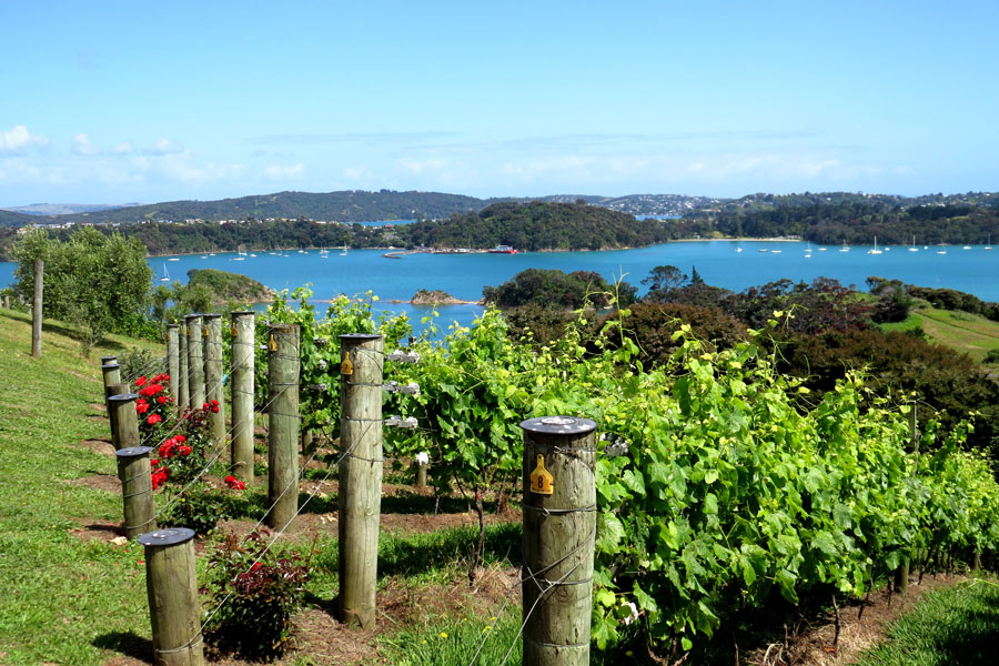 Fine WIne Tours Auckland Vineyard