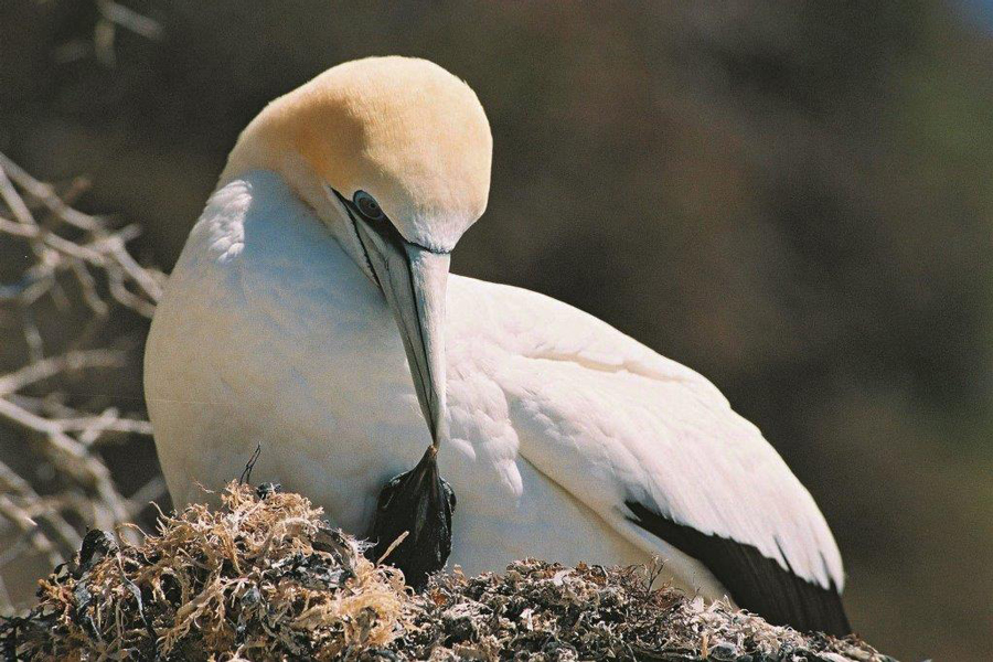 Gannet Tours Cape Kidnappers