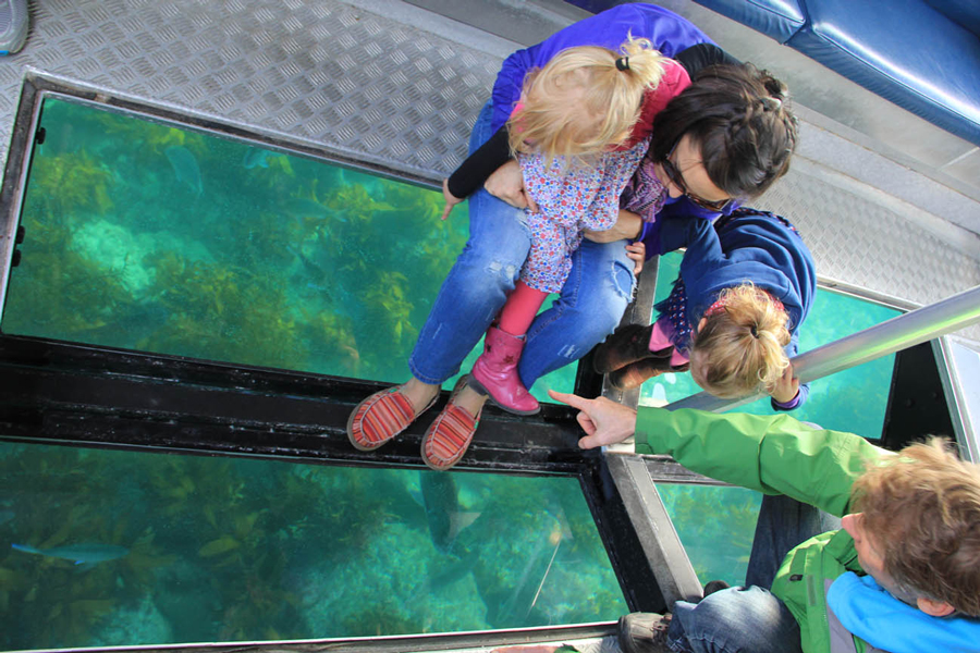 Glass Bottom Boat Whitianga View