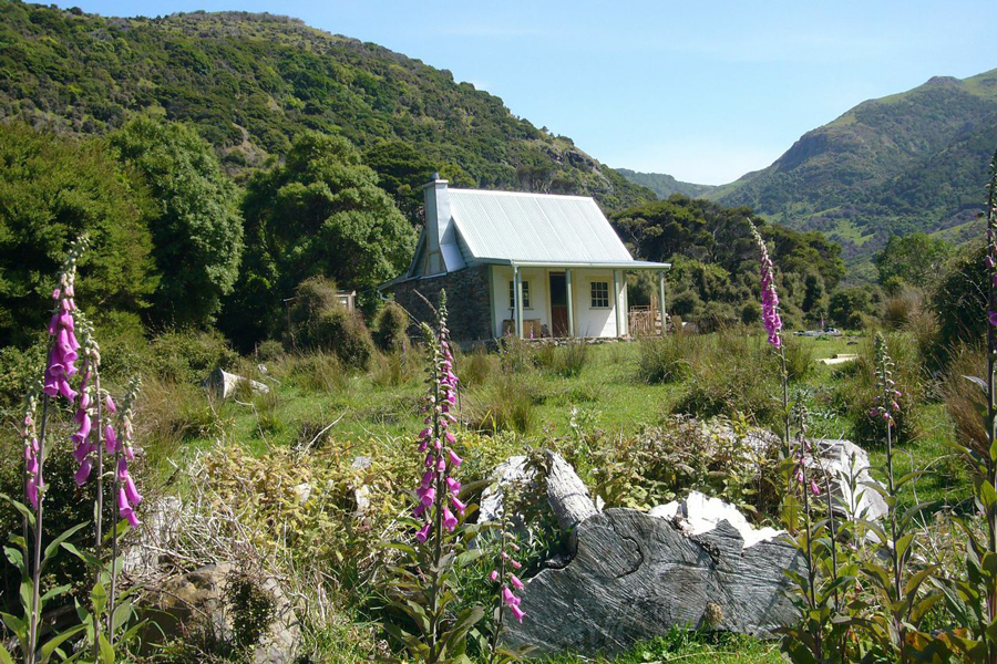 Pohatu Penguin Tours Colonial Cottage Akaroa