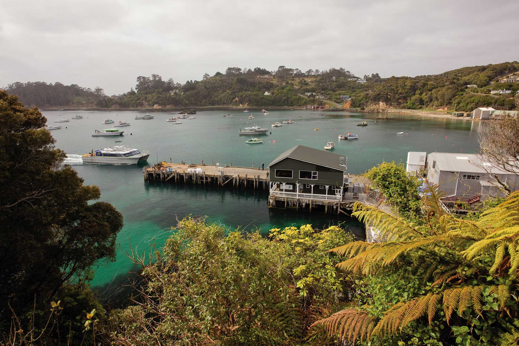 Stewart Island Background