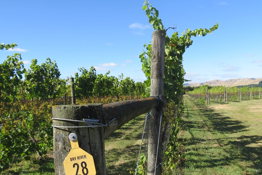Wine Tours Auckland