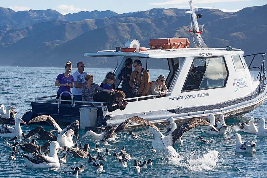 Albatross Encouters Kaikoura