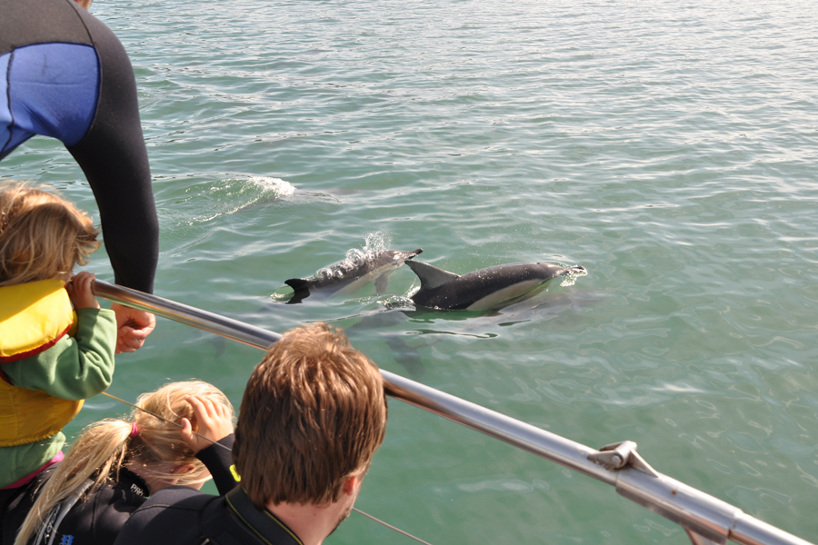 Dolphin Watch Picton