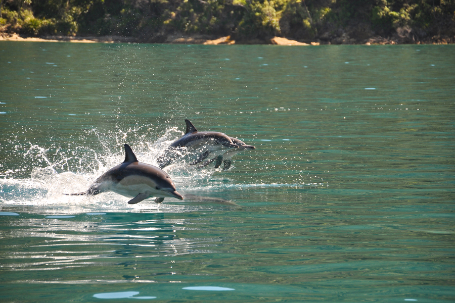 Dolphin Watch Tours Picton