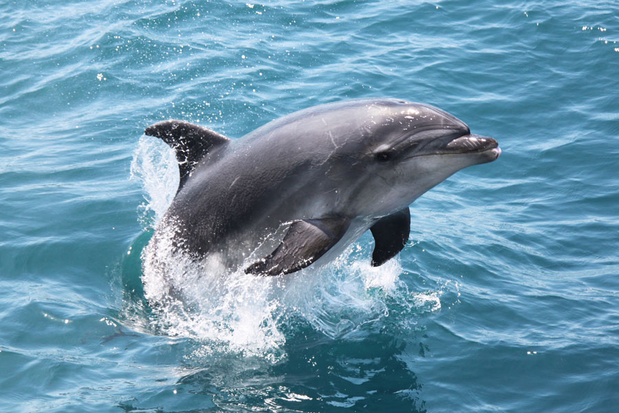Explorer Group Dolphin Boat Trip