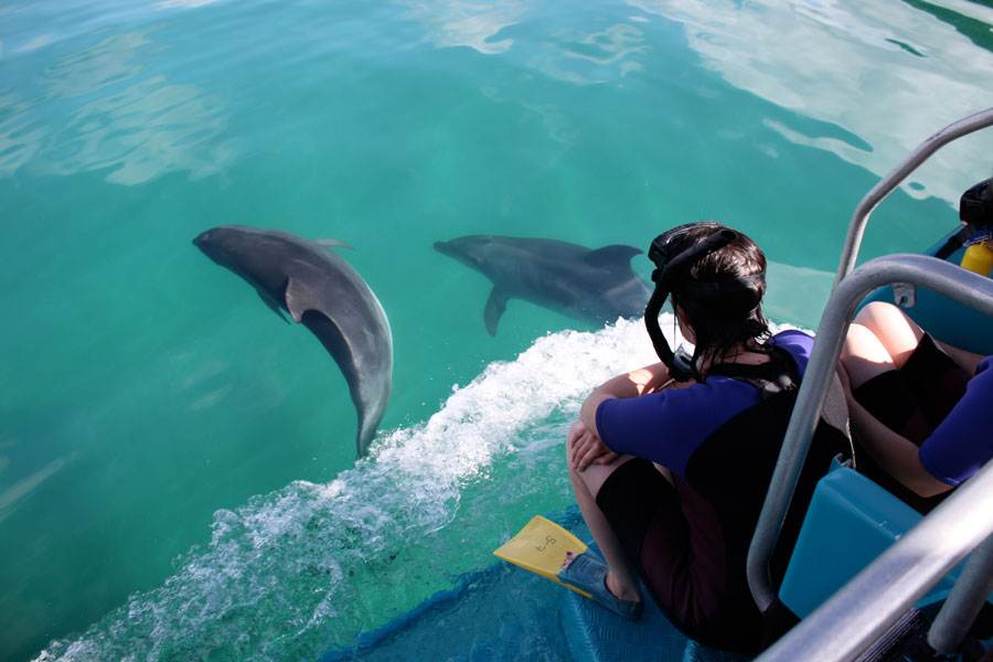 Explorer Group Swimming with Dolphins