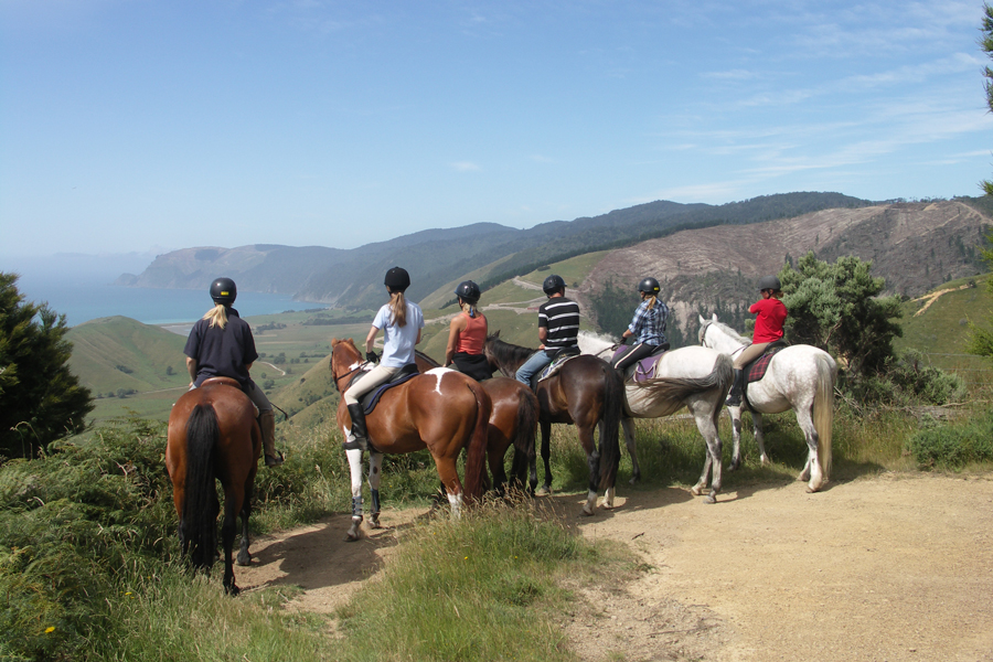 Happy Valley Adventures Horse Trekking