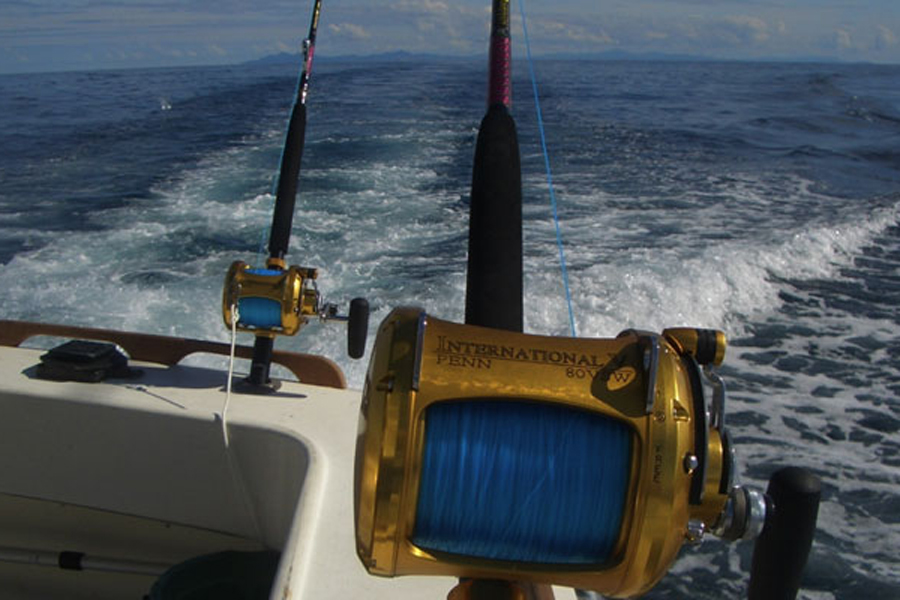 Sunfish Charters Ocean Fishing