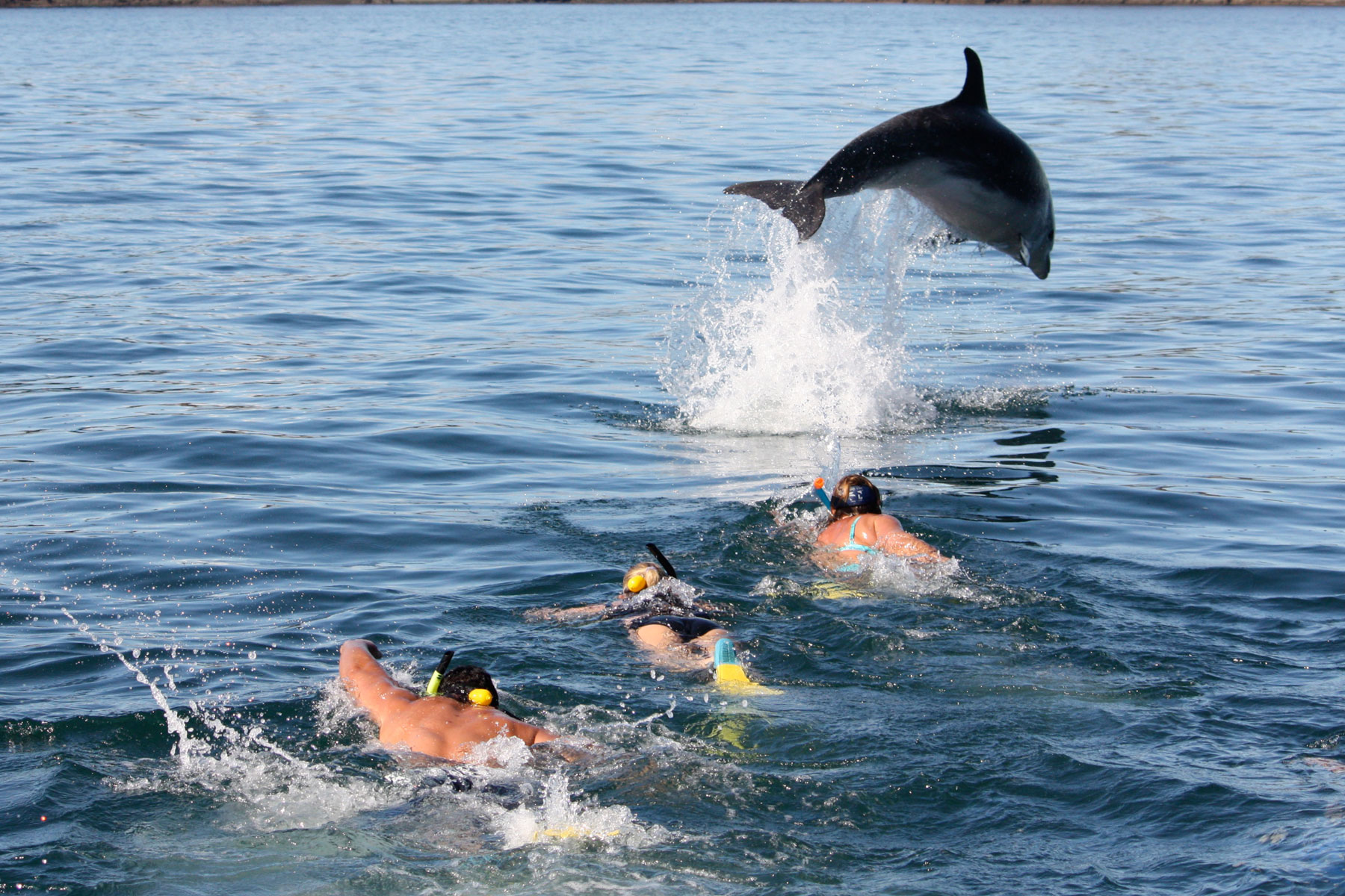 Swimming with the Dolphins Bay of Islands