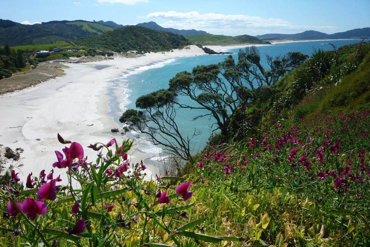 Bream Head Track on New Zealand's North Island