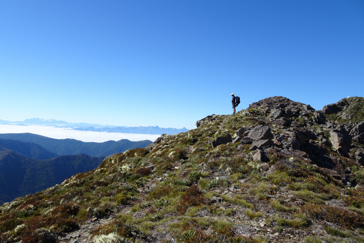 Climbing Mount Rintoul while hiking in the Richmond Range