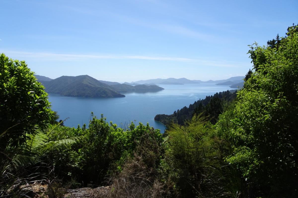 Queen Charlotte Sound from the Queen Charlotte Track