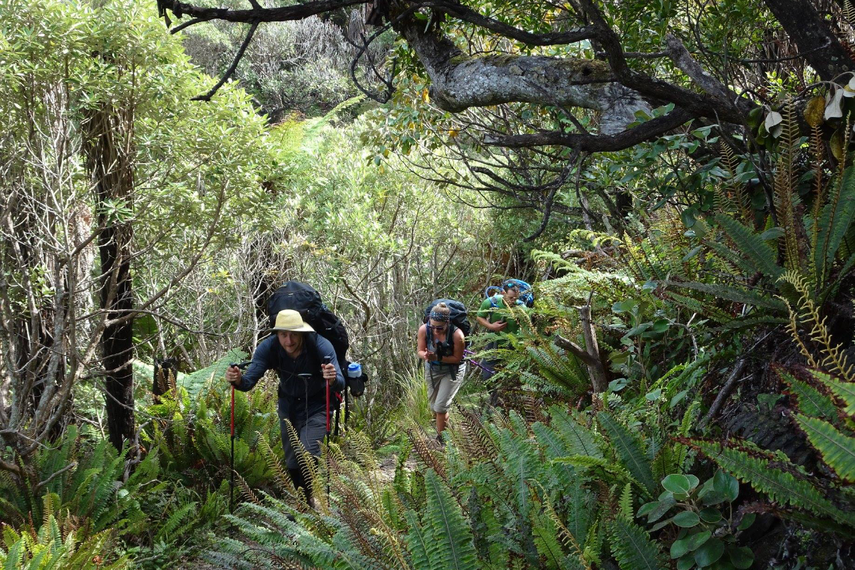 Hiking New Zealand forest