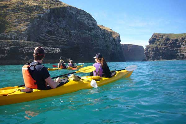 Pohatu Penguins Nature and Sea Kayak Tours