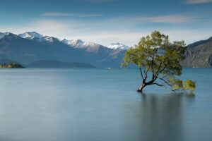 wanaka tree New Zealand holiday package