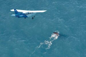 wings over whales kaikoura new zealand south island itinerary 14 days